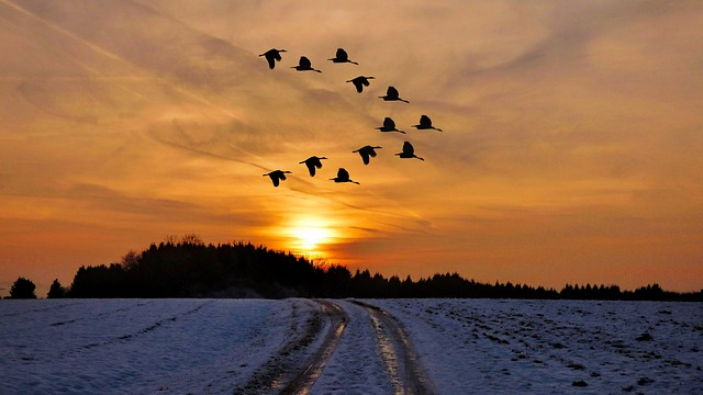Photo of sunset in winter with geese flying in the sky