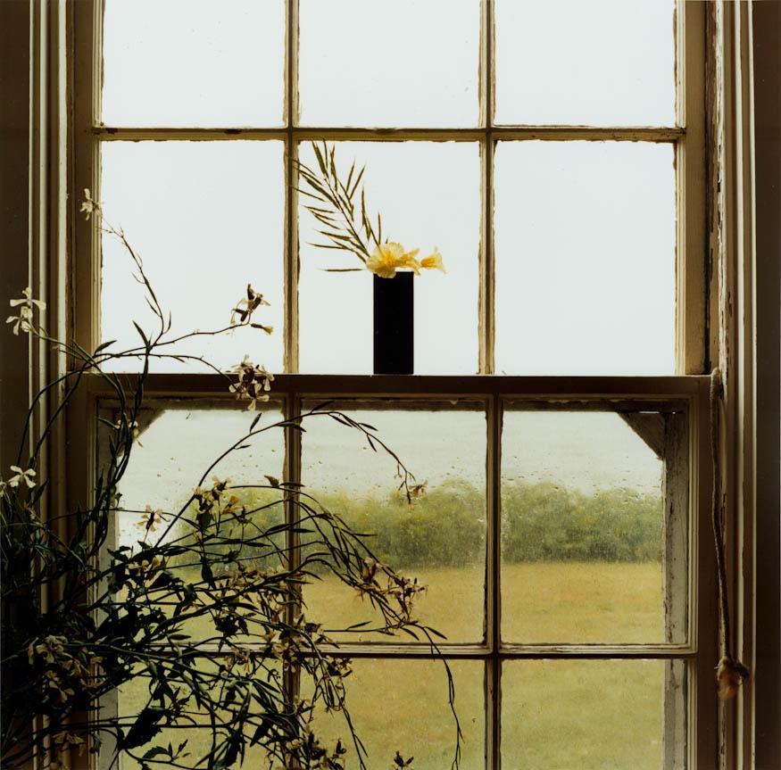 Rainy Day Nasturtiums, 2005