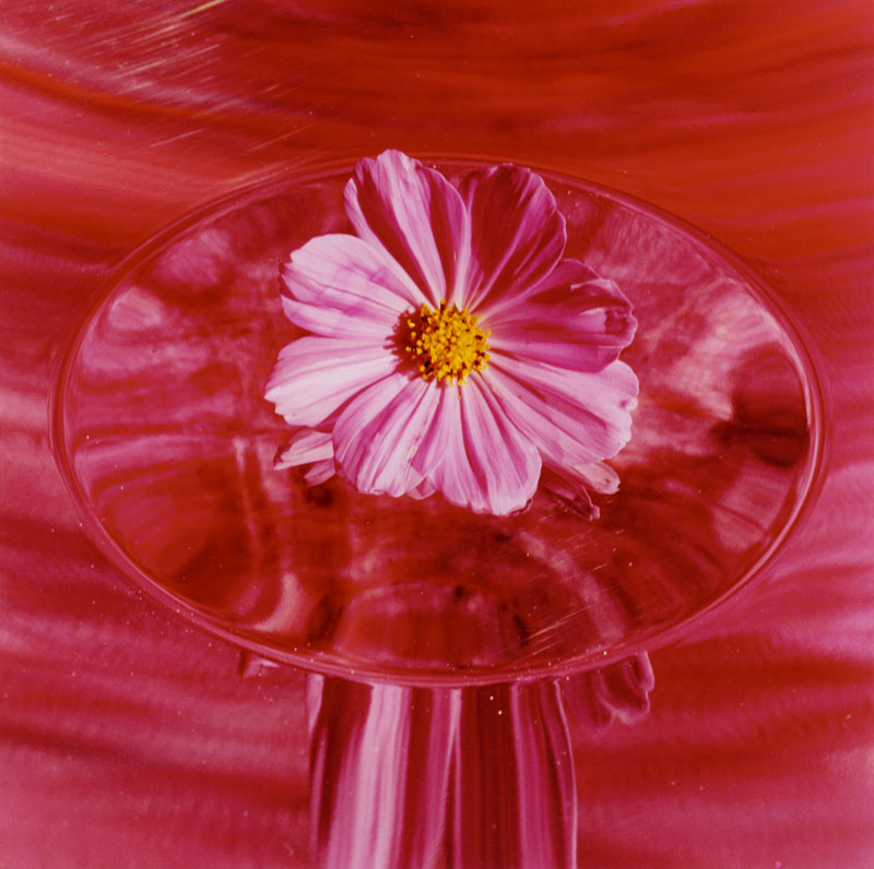 The Pink Cosmo, 2005