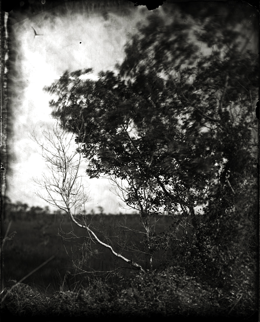 Brush with Bare Branch, 2011