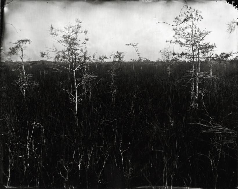 Dwarf Cypress Forest, 2010