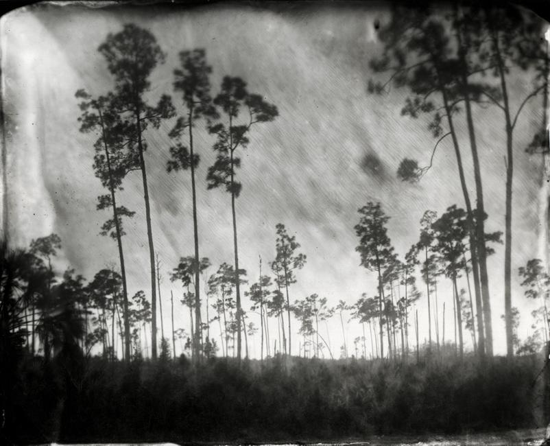 Slash Pines, 2009