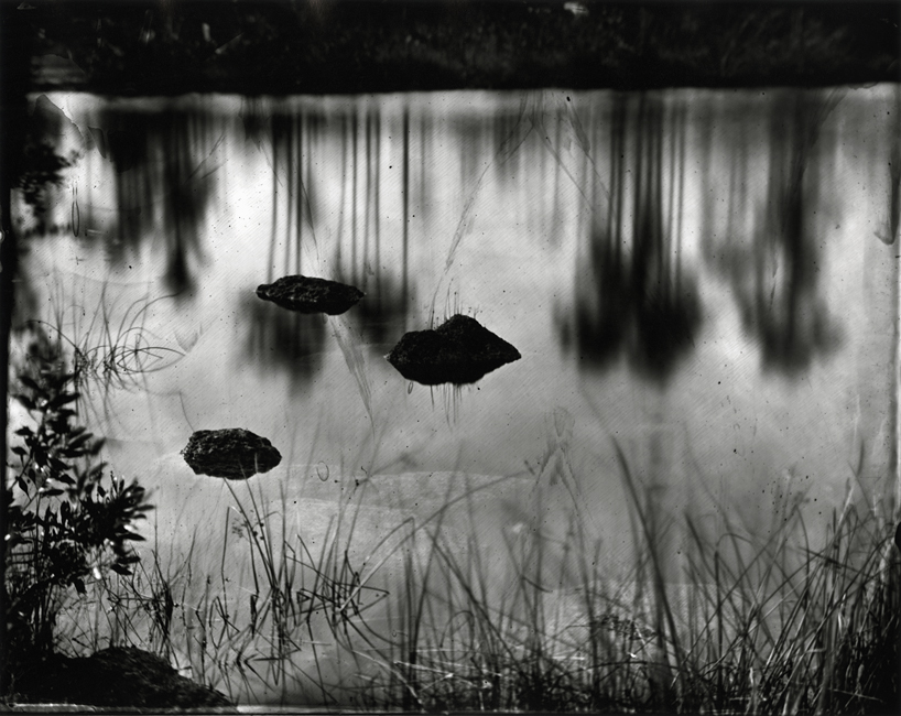 Slash Pines Reflected in Pine Glades Lake, 2010