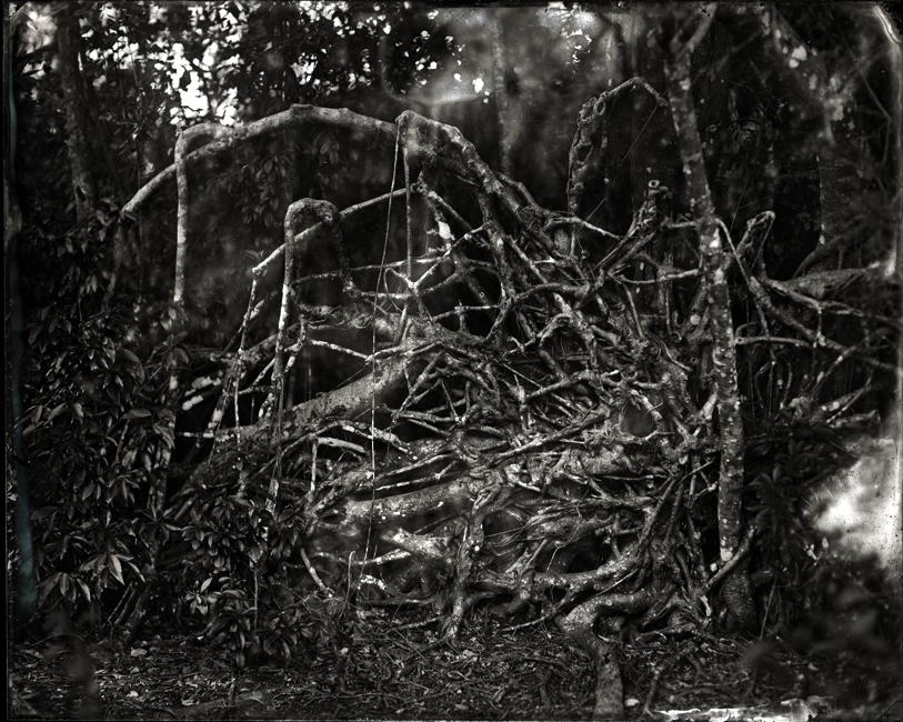 Tree Intestines 2011