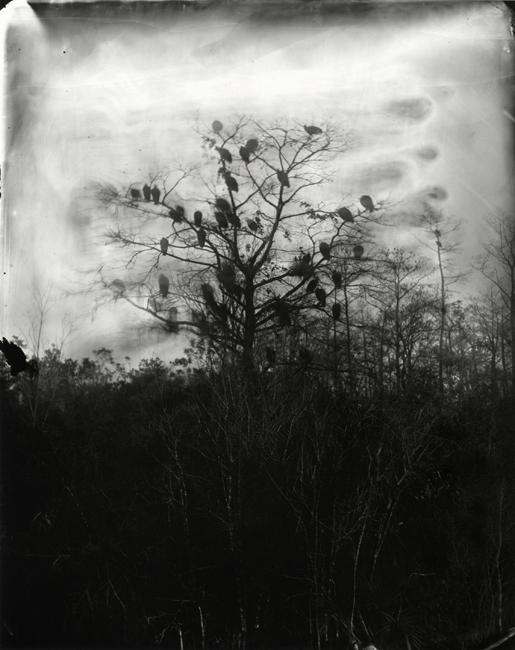 Vultures, 2009