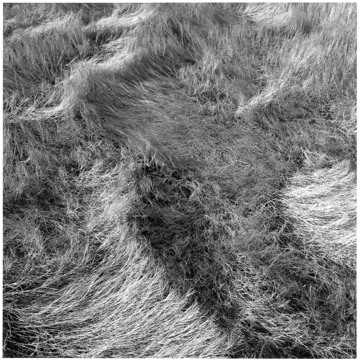 Salt Marsh Grass #1, 1999