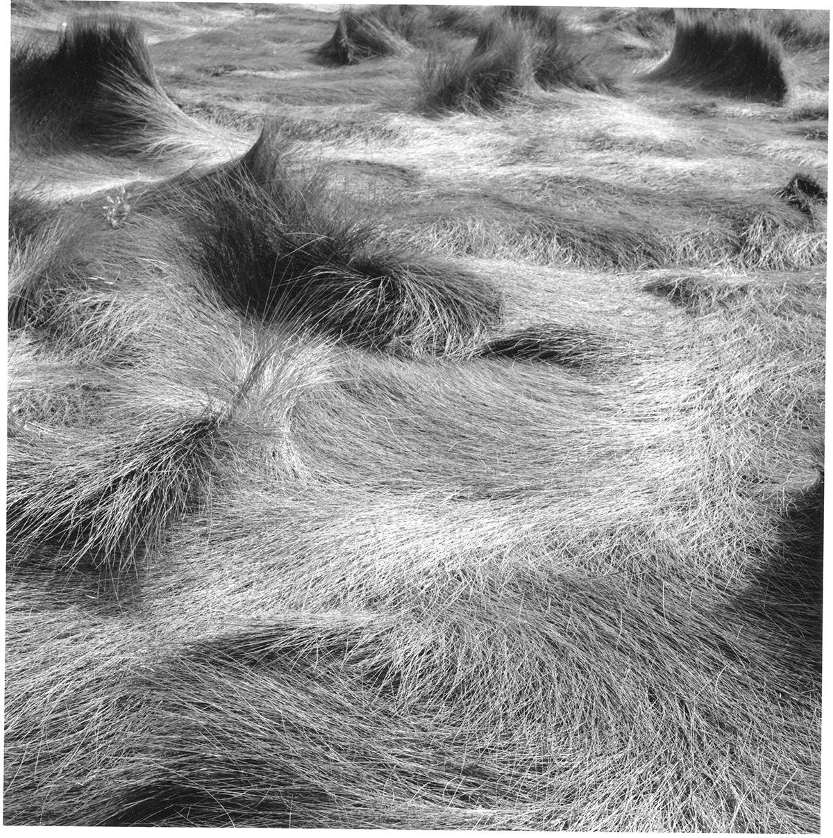 Salt Marsh Grass #30, 1999