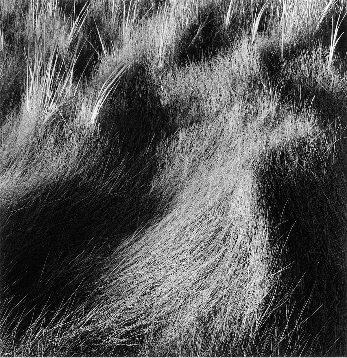 Salt Marsh Grass #31, 1999