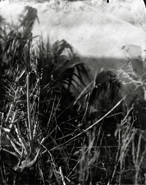 Palm Skeleton, 2010