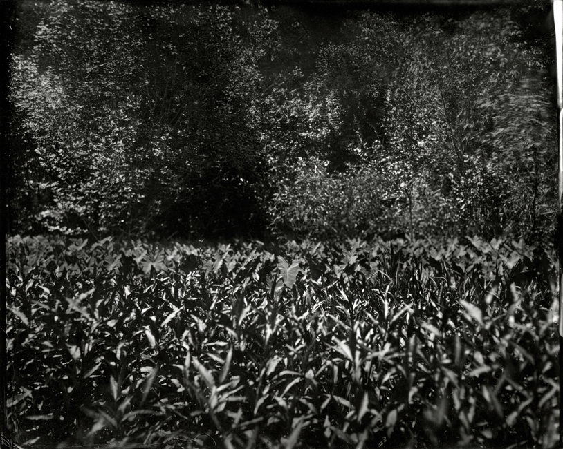 Alligator Grass Under Highway, 2010