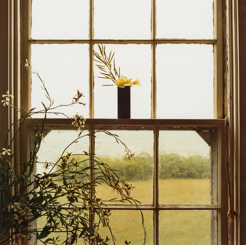 PETER C JONES - Rainy Day Nasturtiums, 2004 - W -.jpg