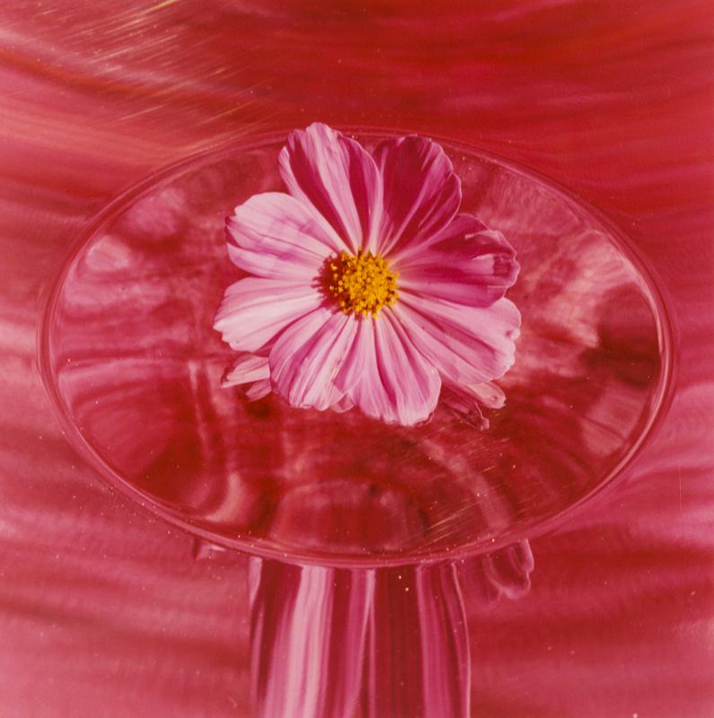PETER C JONES - The Pink Cosmos, 2005 - W -.jpg