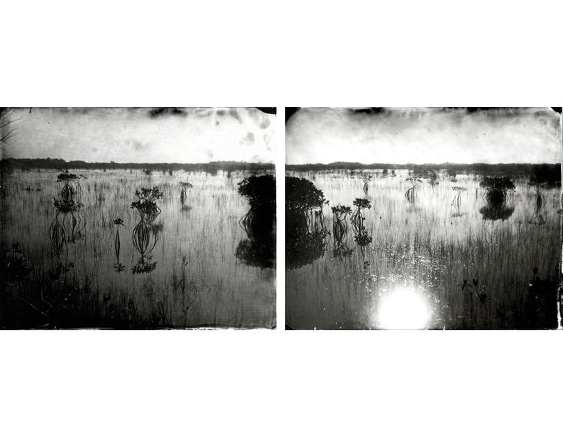 Mangrove, 2010