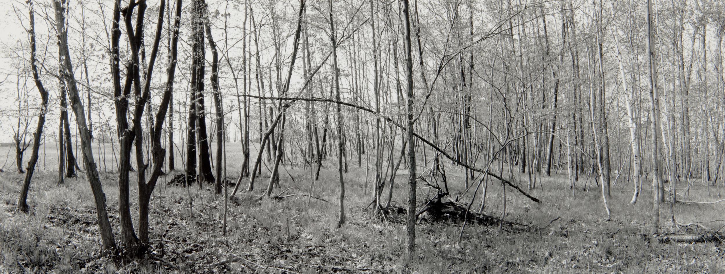 E. Lindbloom, Light Woods, Saratoga Battlefield, 1996, gsp.jpg