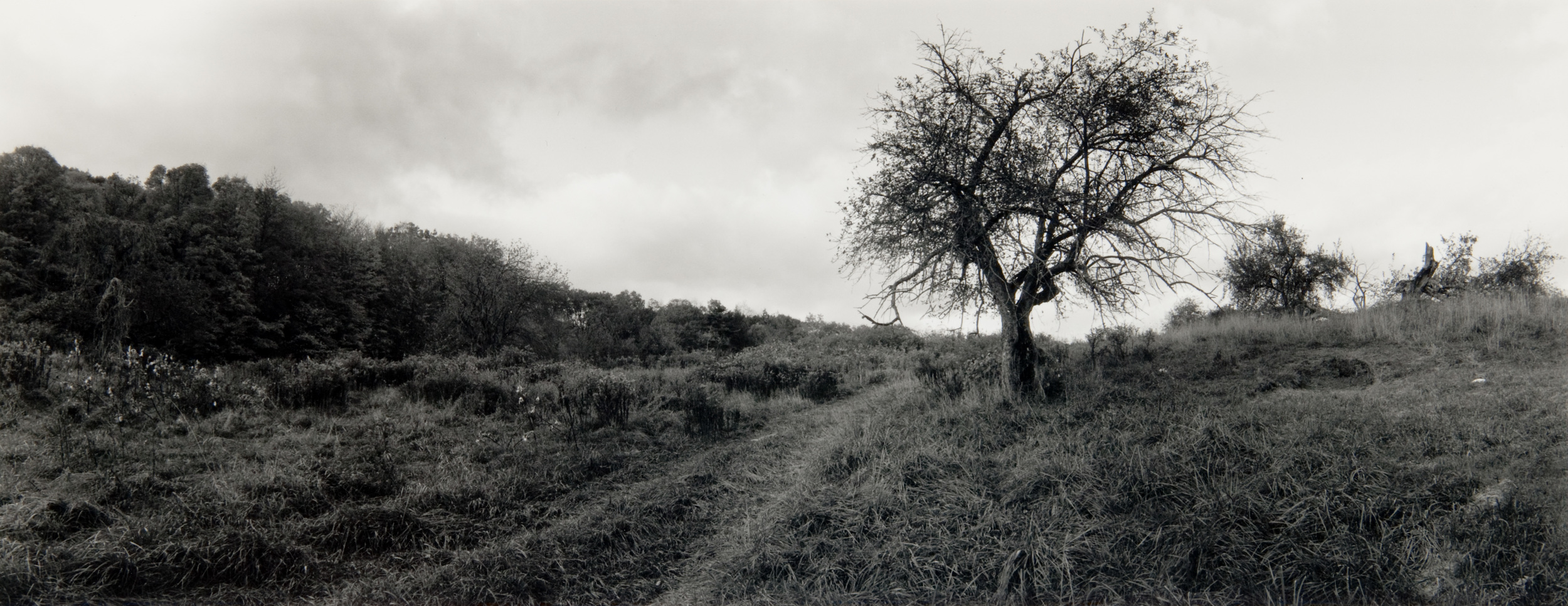 E. Lindbloom, Winston Farm, Saugerties, 1998,gsp.jpg