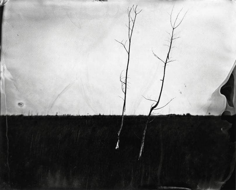 twotreesinsawgrass.jpg