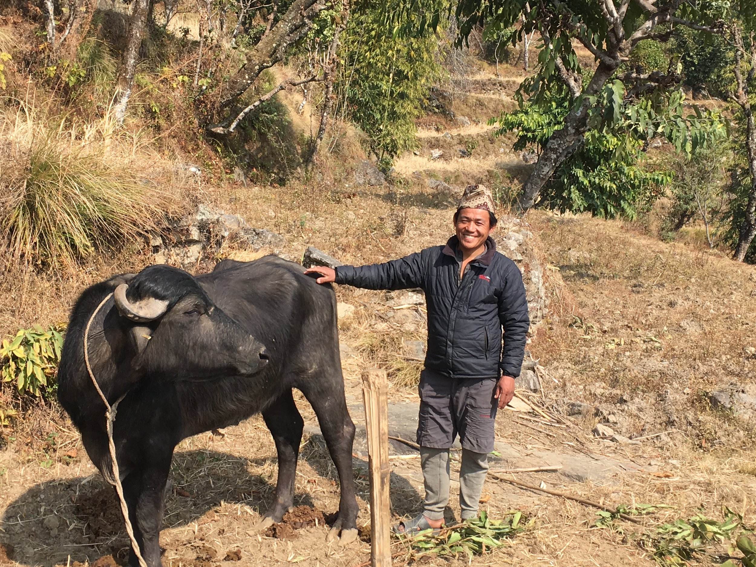Net Kumar Rai, Deusa VDC, Solukhumbo, 2017:    TGT have provided funds for the introduction of three Murra Buffalo to Deusa. The Buffalo move from farm to farm to improve the stock, so that offspring produced are stronger and healthier than before.