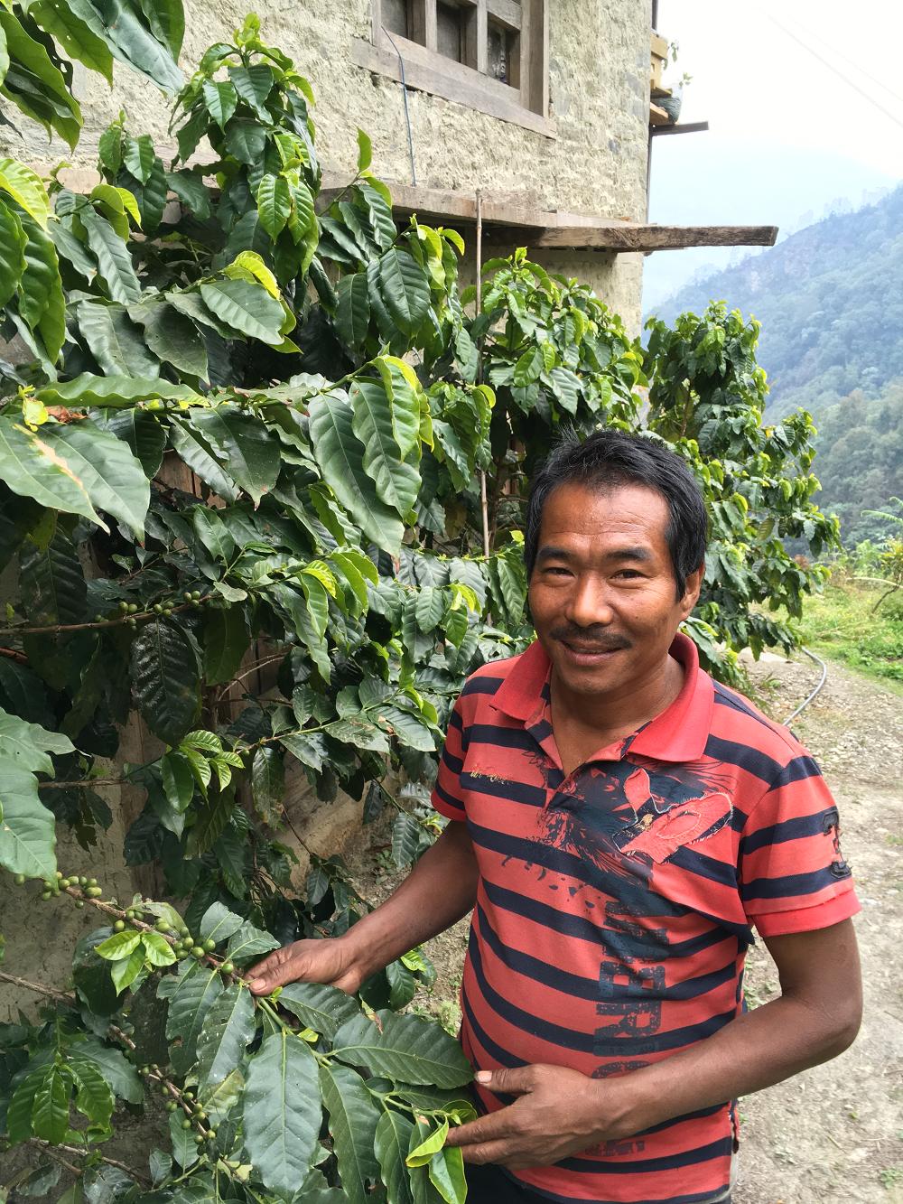 Dilisher Rai with his coffee plant in Deusa, Solukhumbo. (February, 2017)