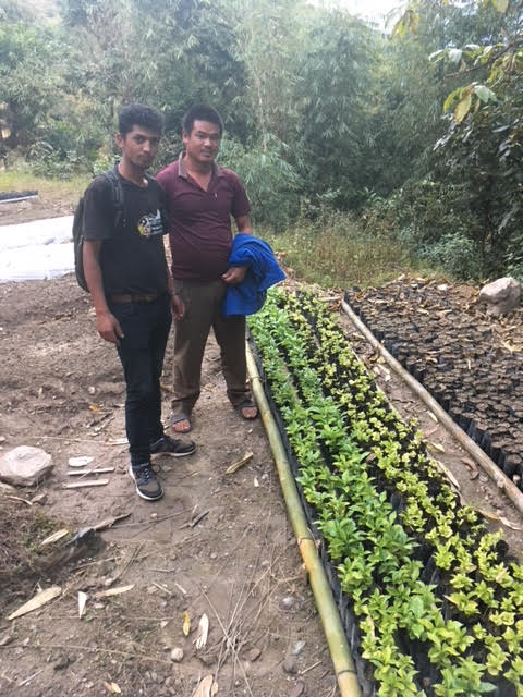 Cultivating coffee saplings in Deusa.