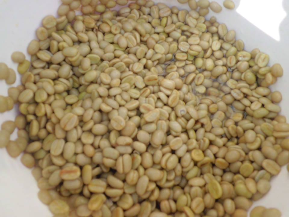 After pulping, we are left with 'parchment', this is coffee that has had its skin removed, but still has a thin layer protecting the interior green coffee bean. The parchment is wet, so is left out to dry for a few days to lower its moisture content. Once dry, the parchment has a hard shell, this protects the green coffee bean inside keeping it fresh for many months if necessary.       This parchment, once dry, will be carried in sacks to  Deusa AFRC.  Through our partners, EcoHimal, the coffee is then transported to Kathmandu to be sold to coffee traders. From there it will find its way to roasting houses in Australia and New Zealand.