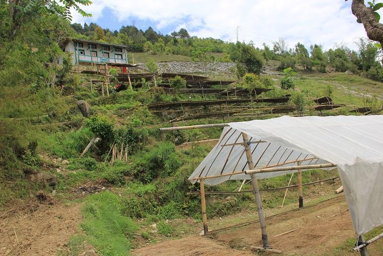 The original plant nursery at Deusa AFRC