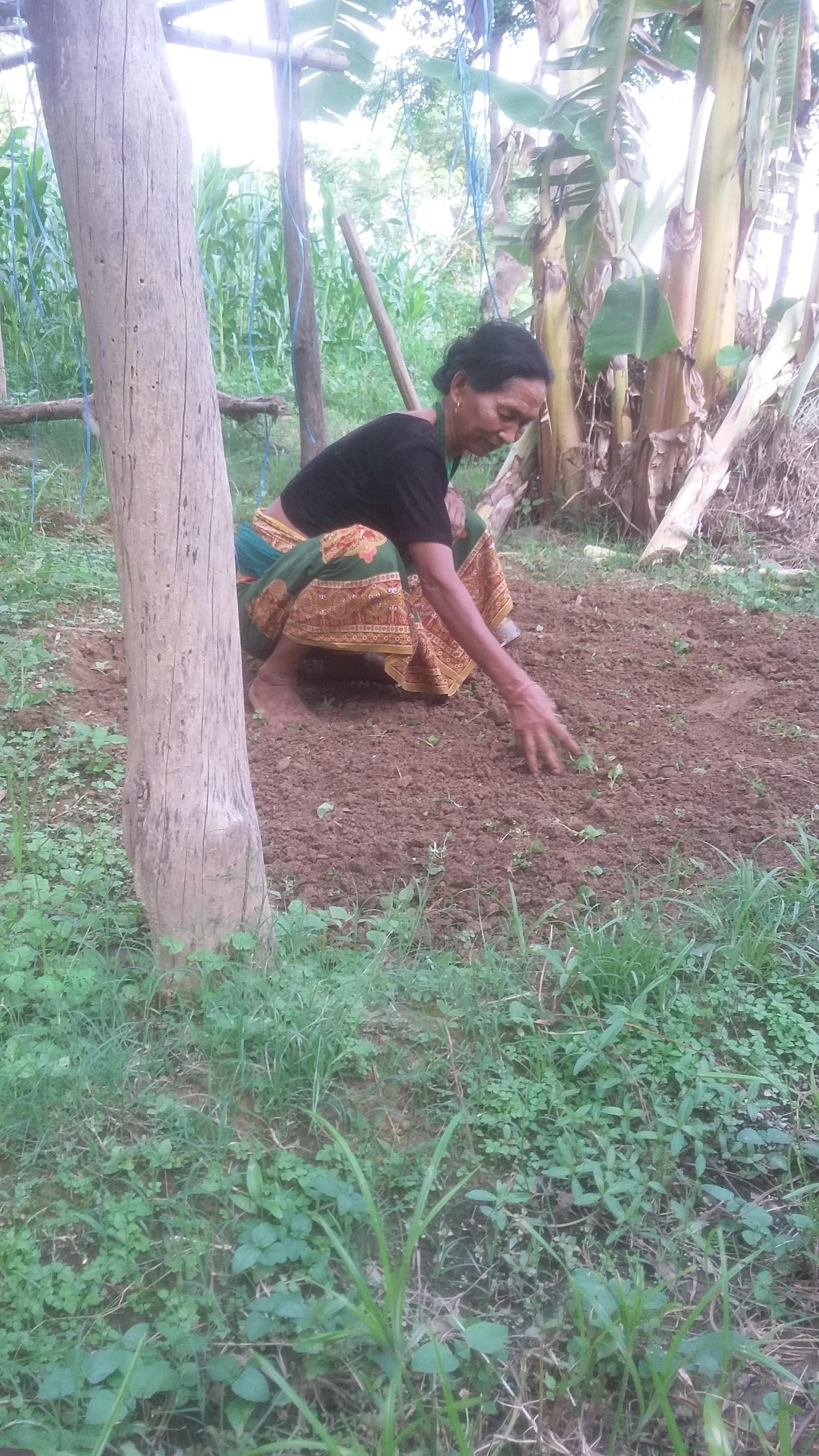 Tej Kumari Thada tending seedlings on her farm in Dhahaba.