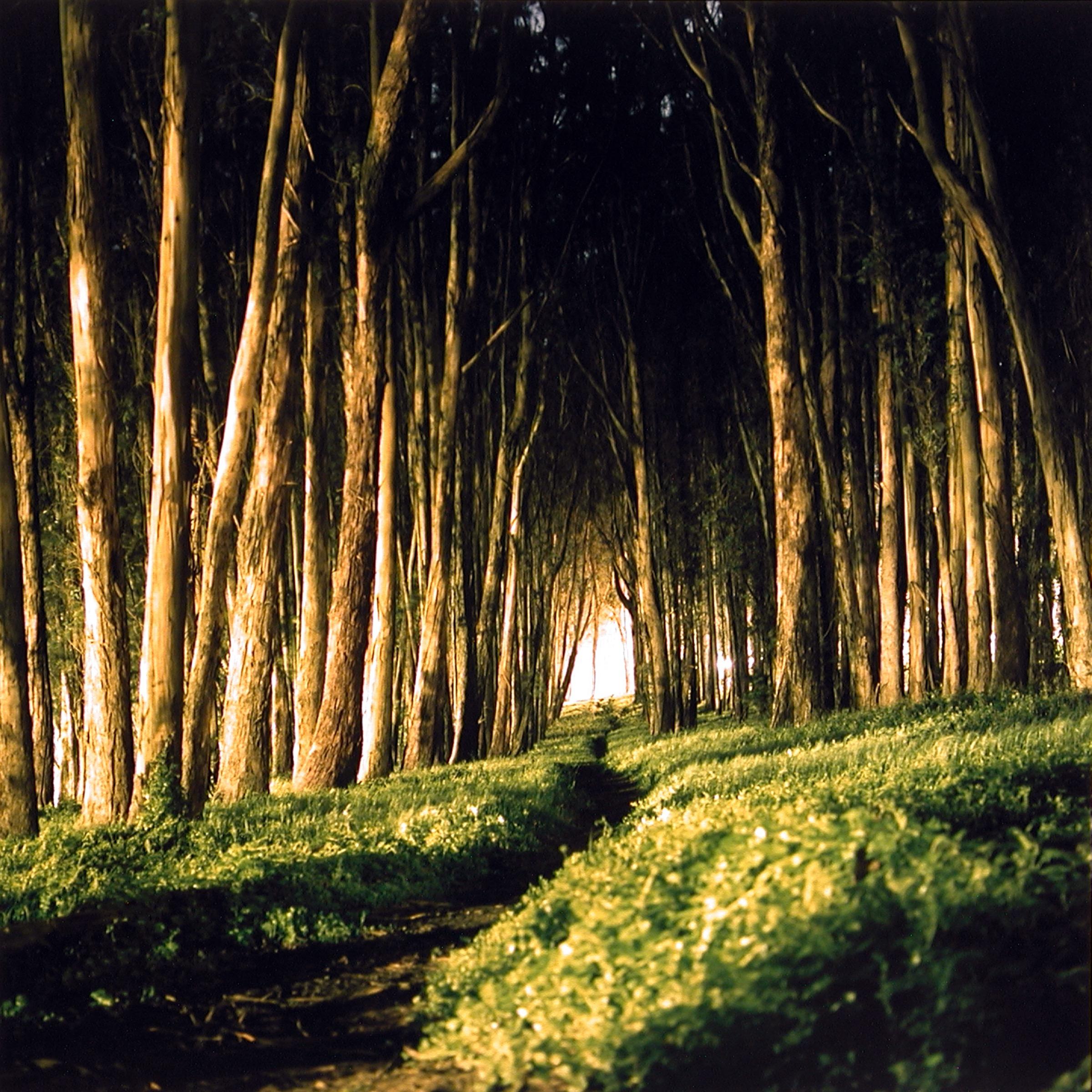 PRESIDIO PARK SF CA 2002.jpg