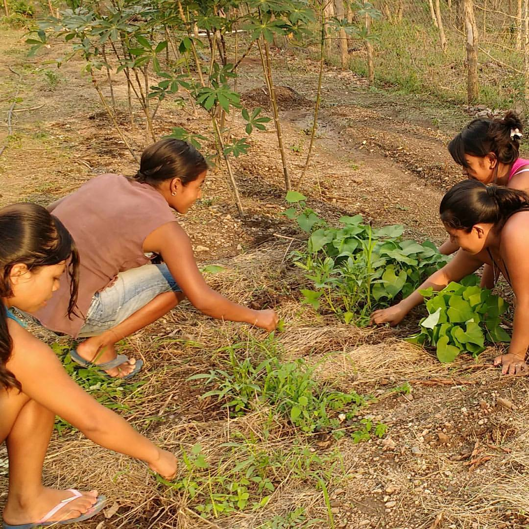 PSAE team working in the organic gardens
