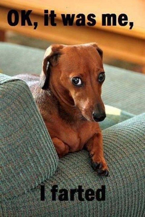 Image:www.ourdogsgotablog.com