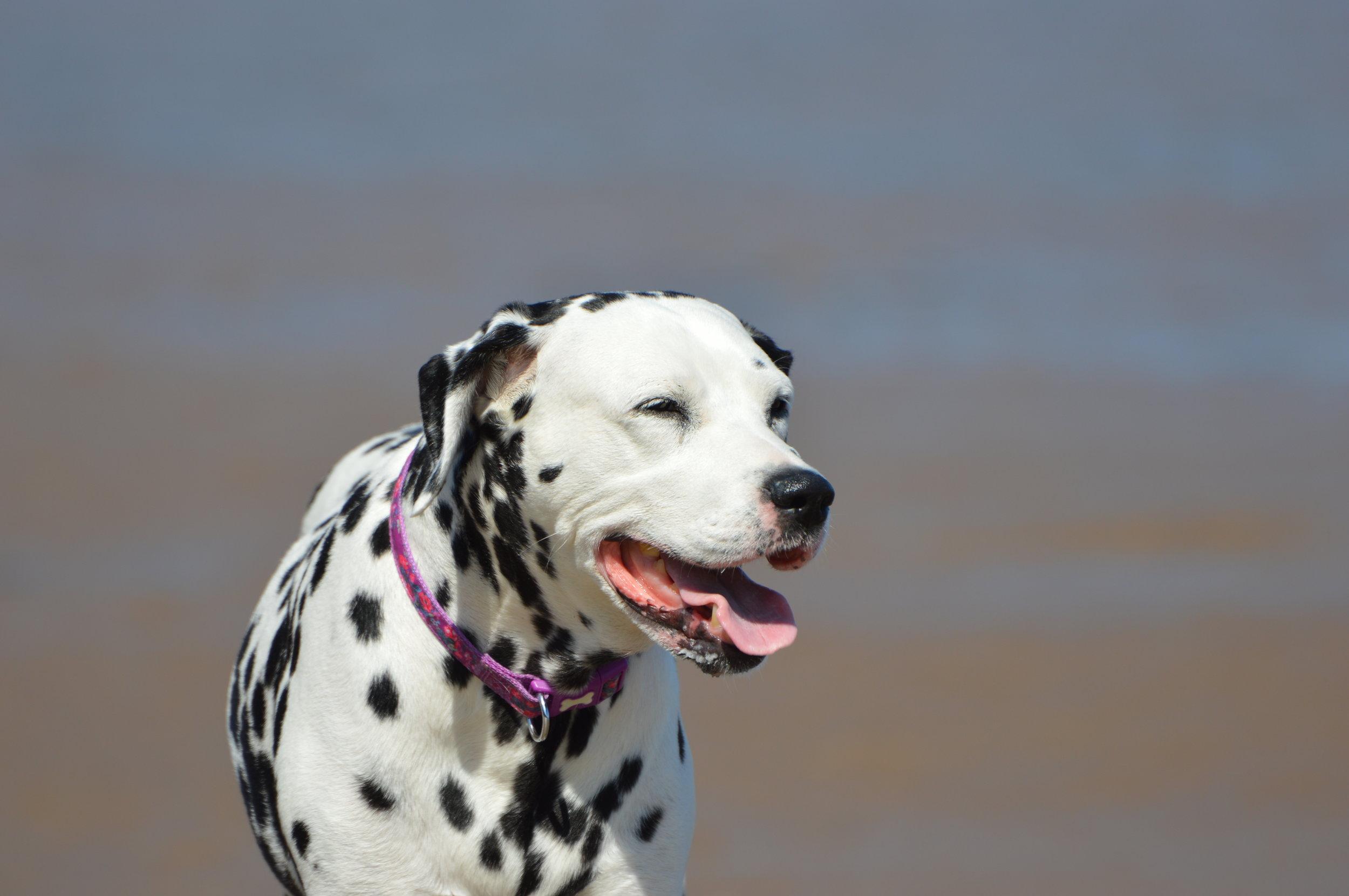 Molly Dog!