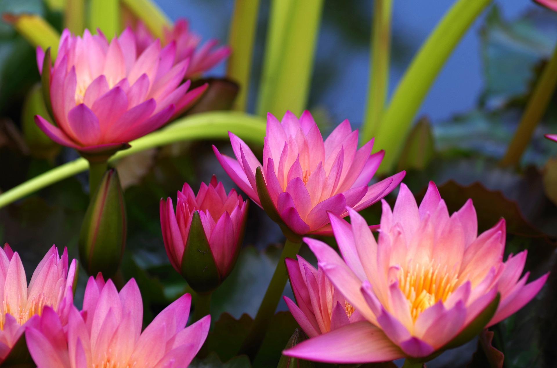 integrative mental health acupuncture stress relief water lilies