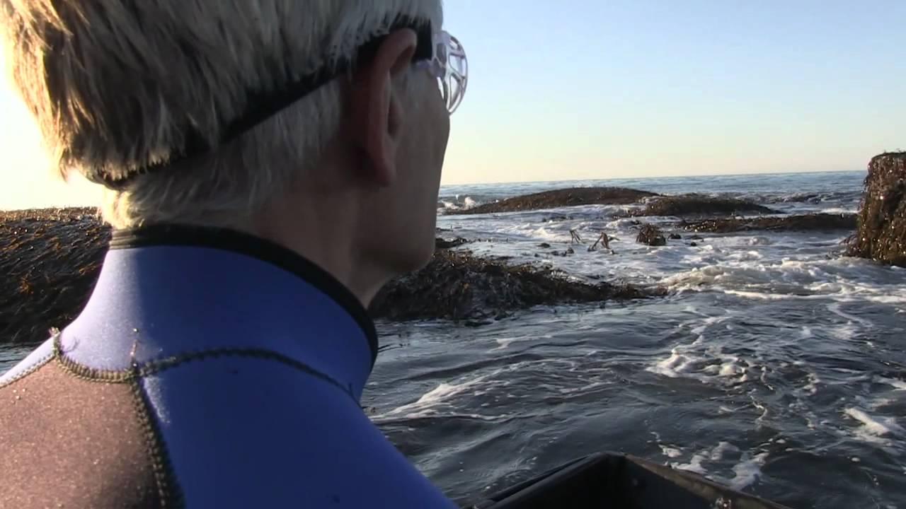 THE PERENNIAL PLATE: SEAWEED MAN