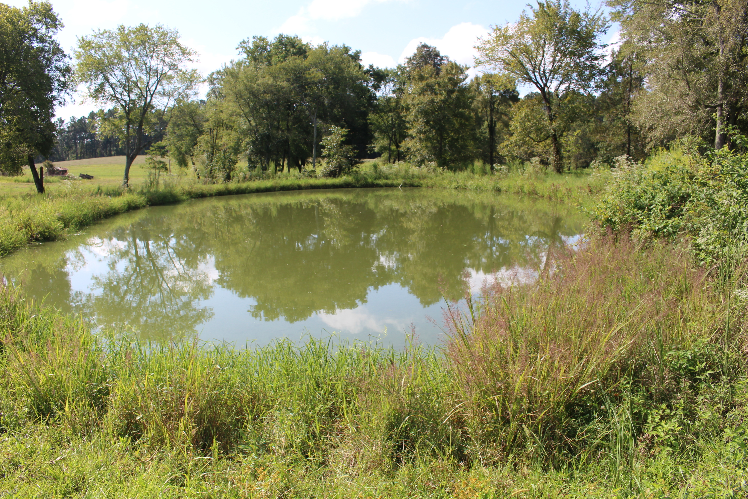 IMG_4861 Catfish pond.JPG
