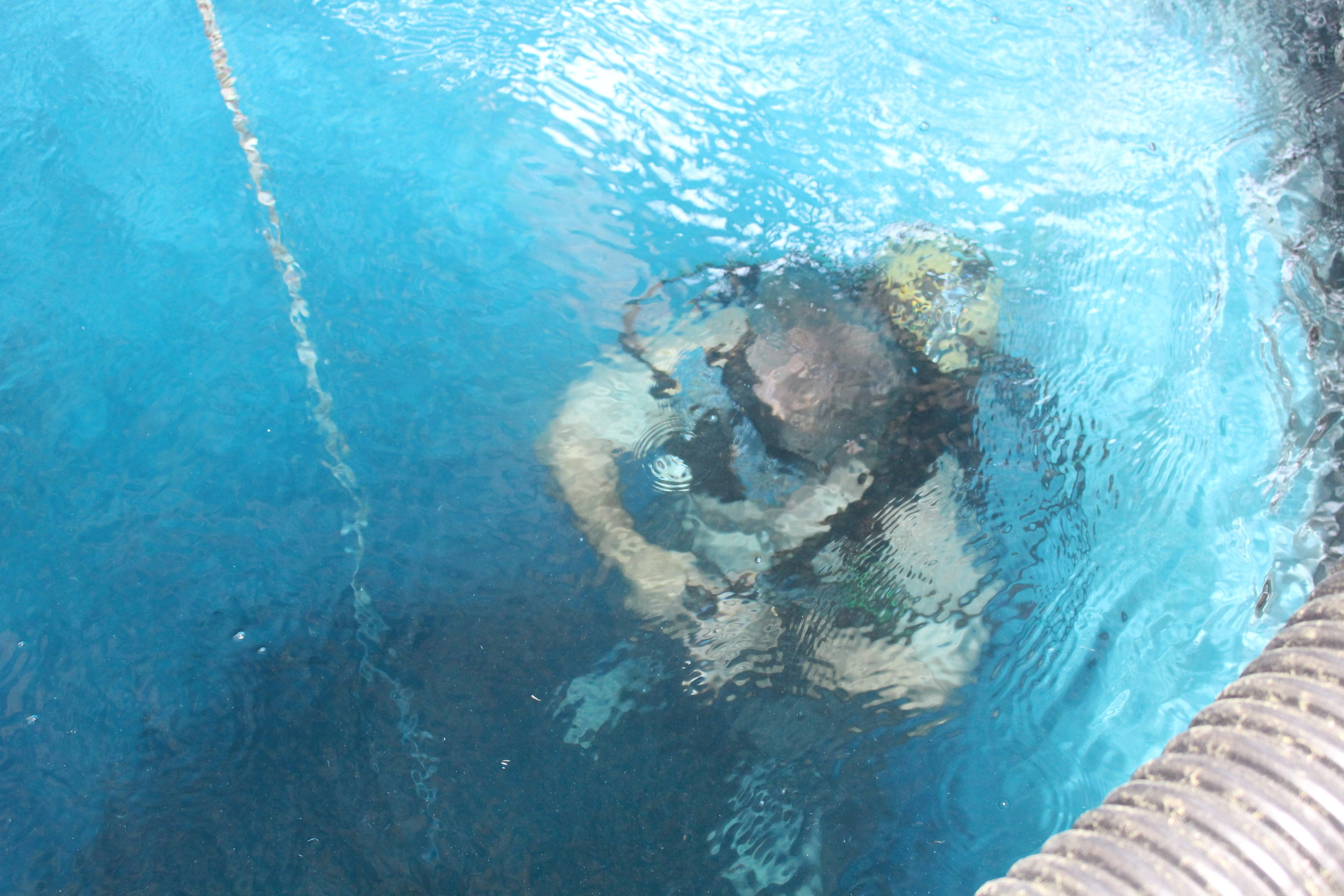 Fort Villanow Scuba Tank 2019 Diving Lessons now available - 2.JPG