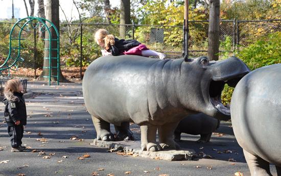 18-hippo.jpg