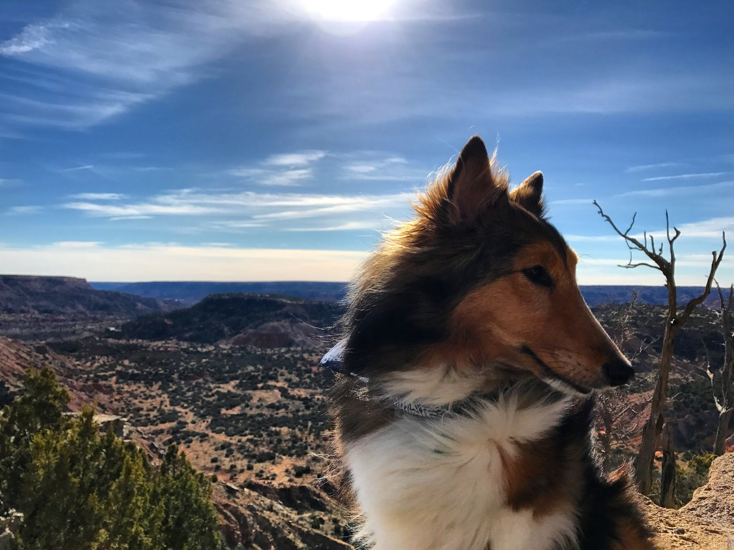 sheltie+on+the+palo+duro+canyon+rim.jpeg