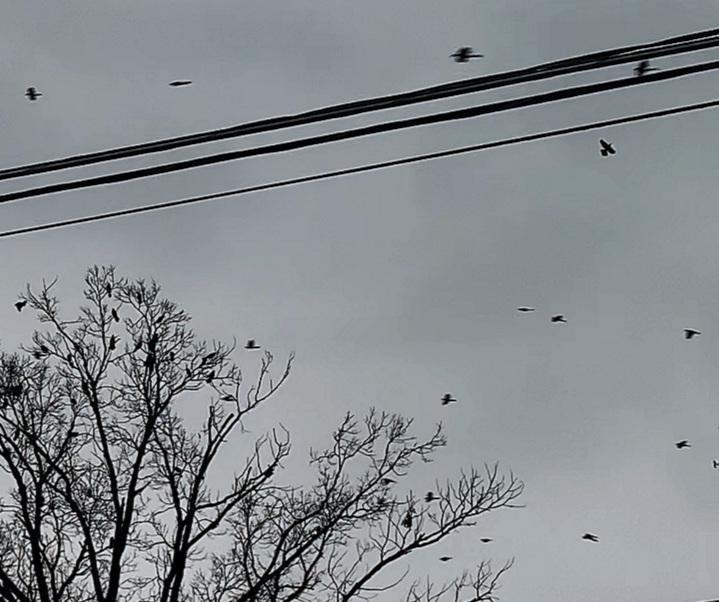 Birds for days.
