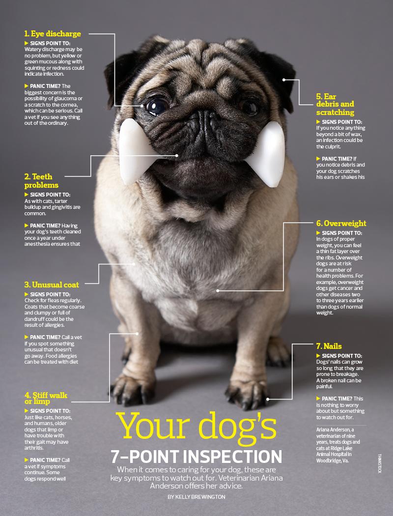PETS_DOG_inspection.jpg