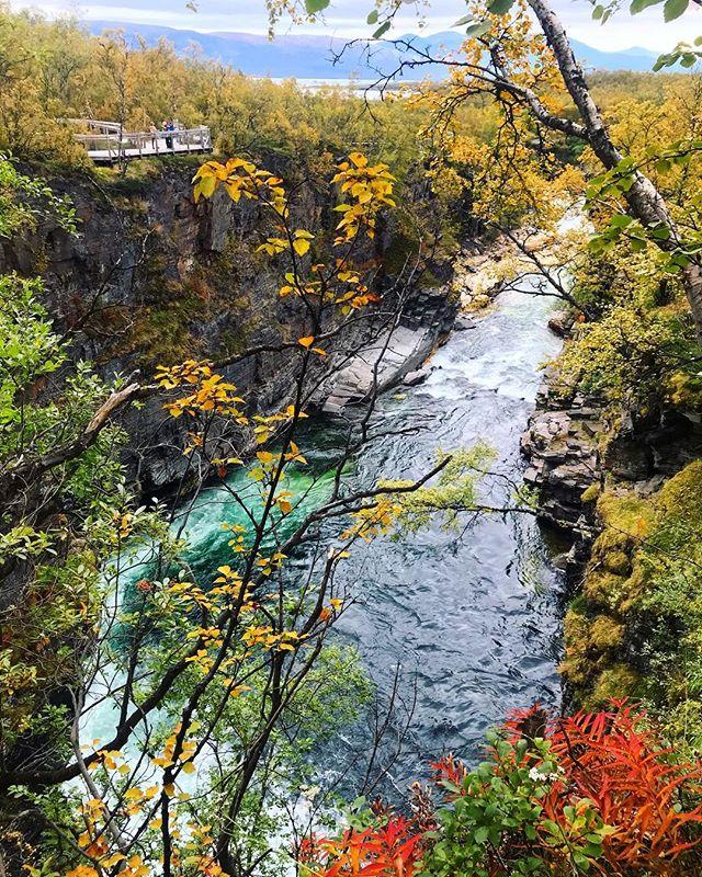Apparently, north of the Arctic Circle is where it's at. Abisko National Park, Sweden. 🇸🇪 🍂 . . . .  #sweden #abisko #nature #visitsweden #fall #color #scandinavia #travel #lapland #blackgirlstraveltoo #dametraveler #flynorwegian