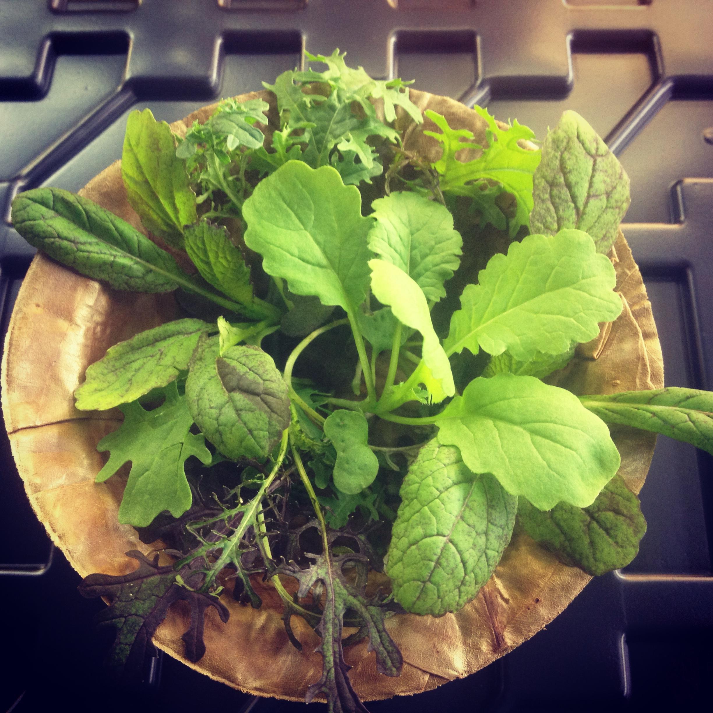 Organic-greens.JPG