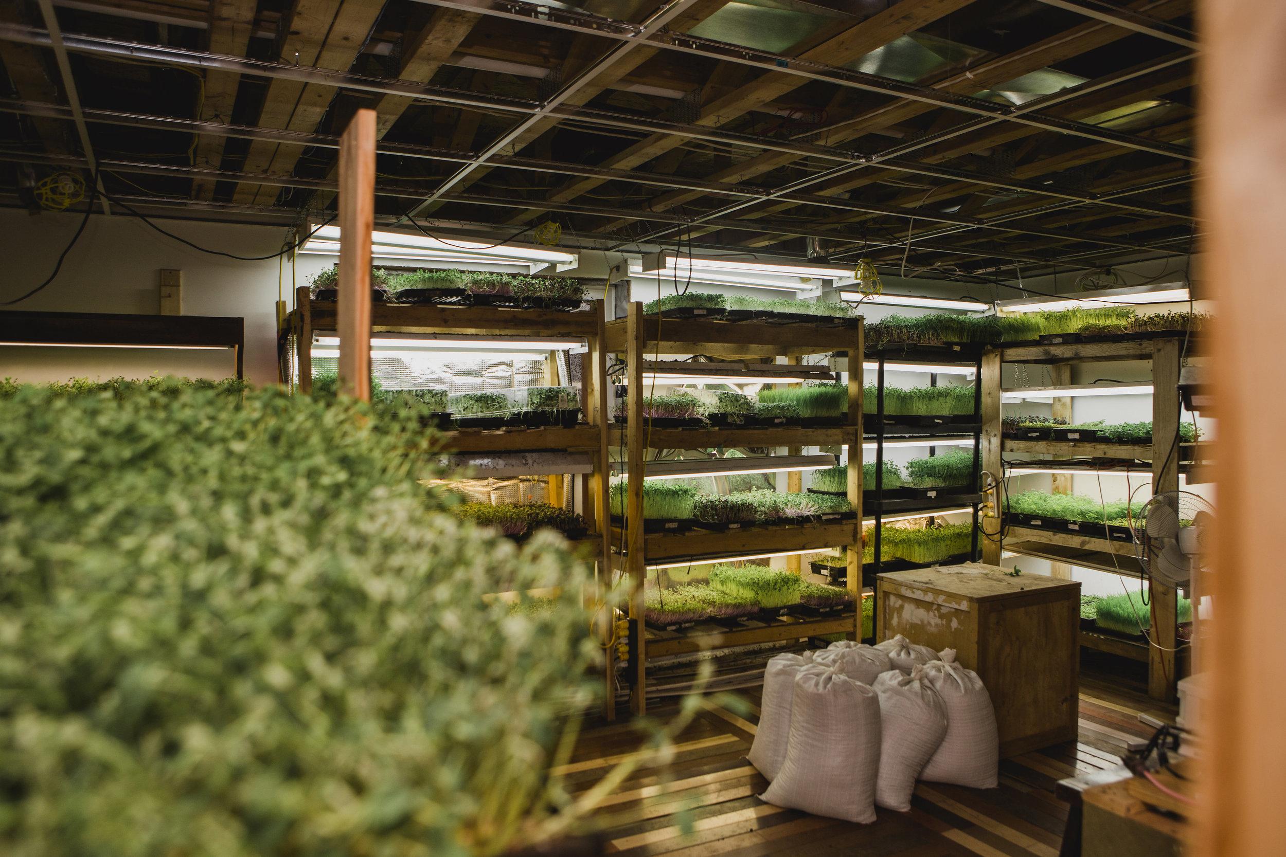 urban farming, green sister gardens, indoor grow space