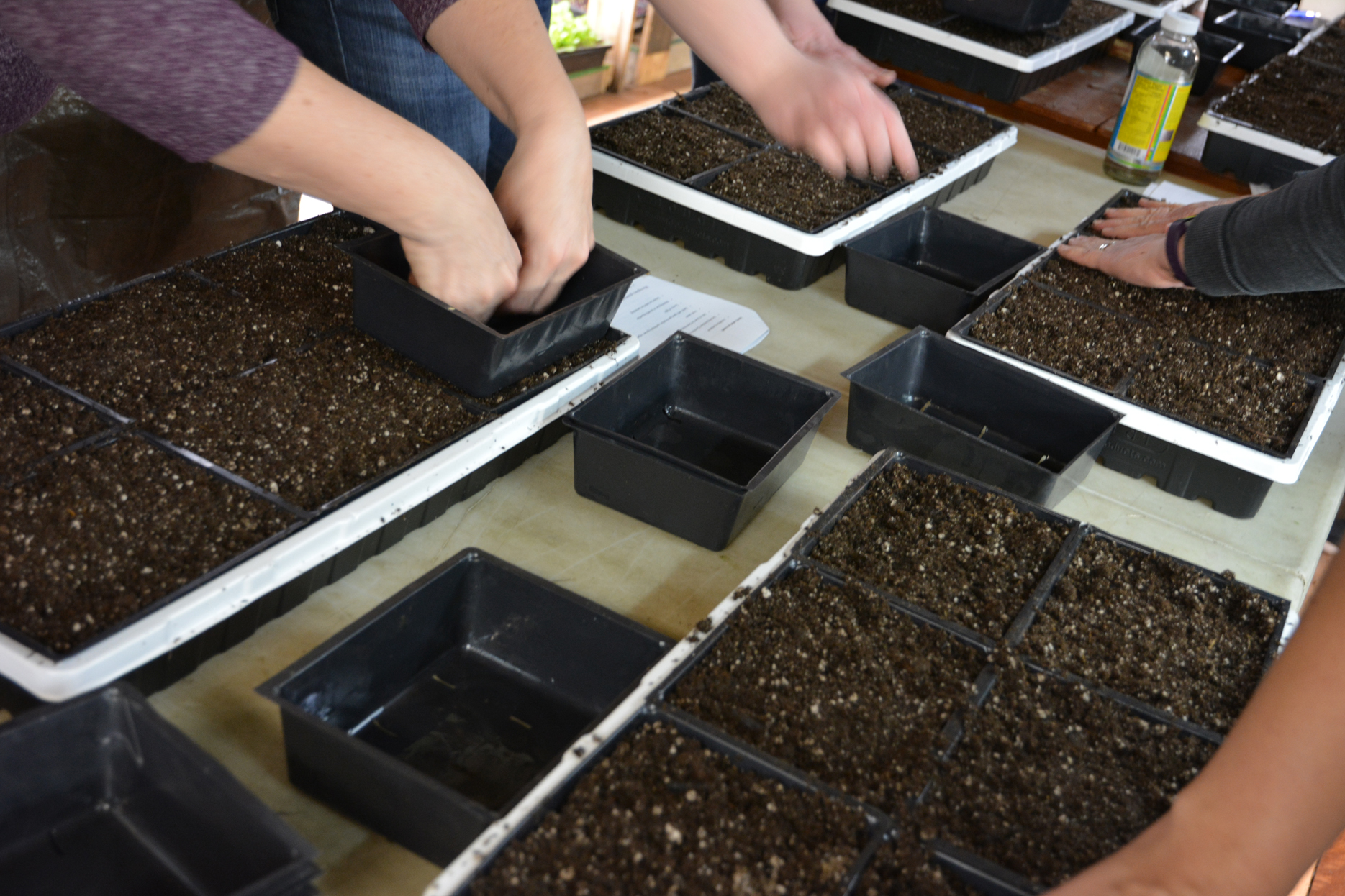 Growing Microgreens - Saturday May 12th 2 classes1:30pm & 3:30pm