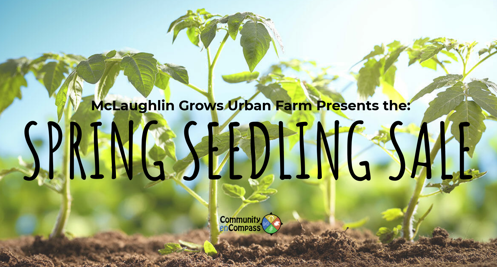 Spring seedling sale.png
