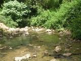 riverine.jpg