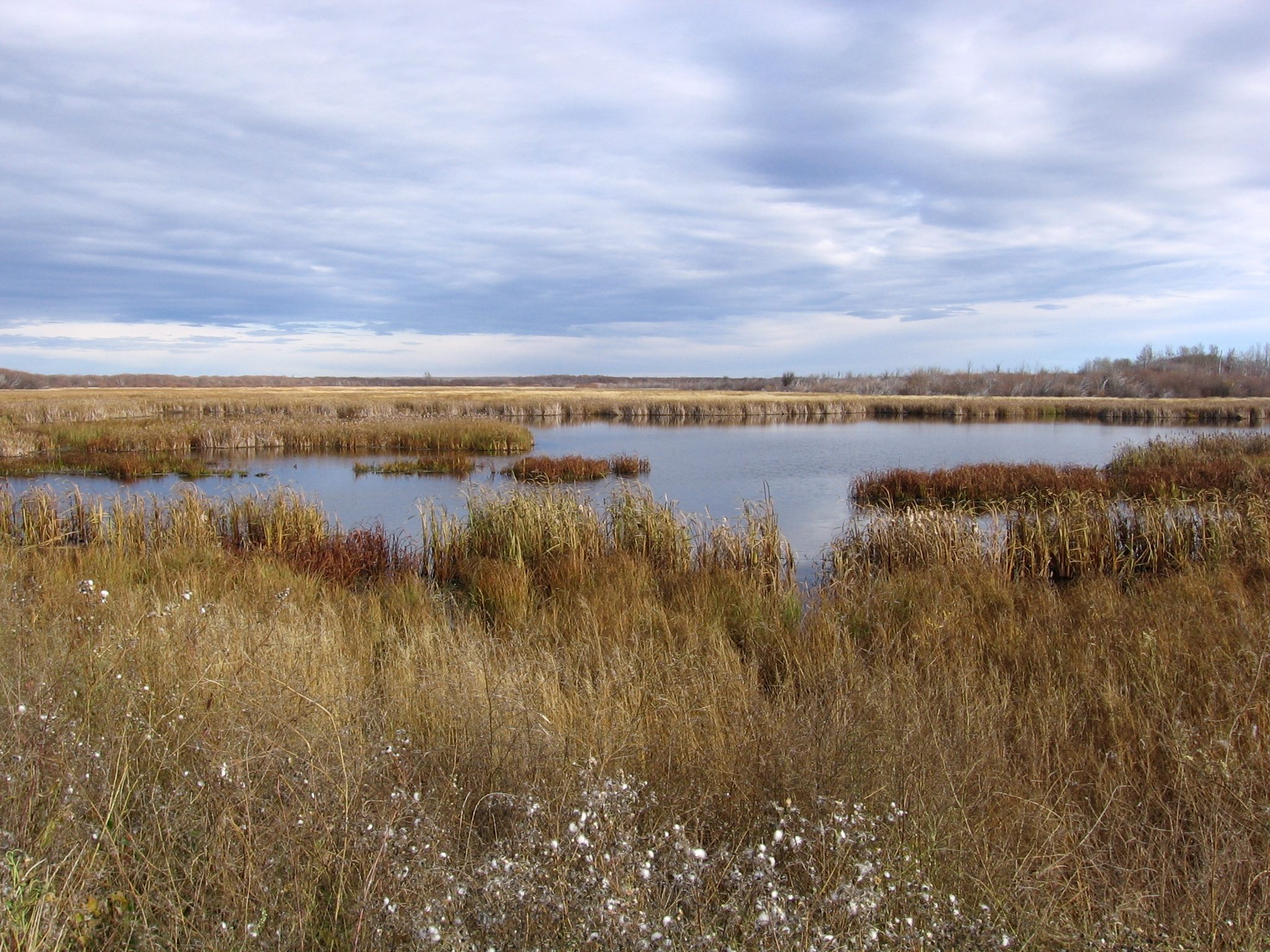 Pengrowth_6-28 large marsh.jpg