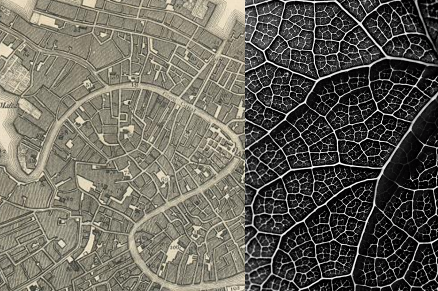 Matt Grocoff's comparison of structure of a leaf and the structure of self-organizing, pre-industrial cities like Venice, Italy.