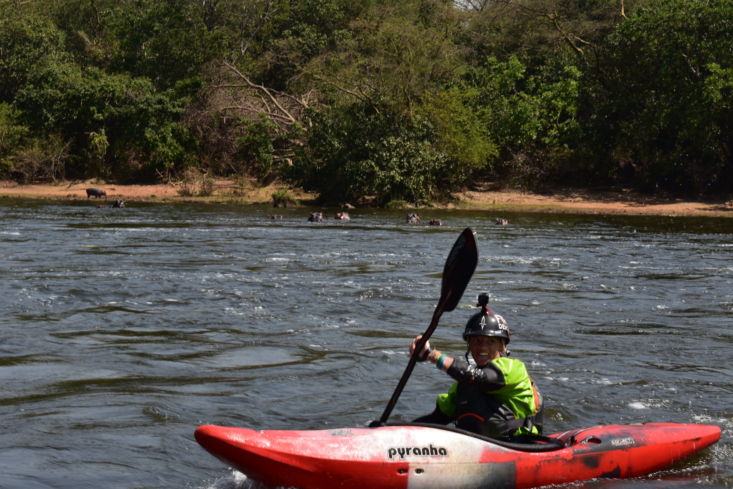 Just paddling through flatwater while being watched by some very large mammals. Photo by: Bob Frederick