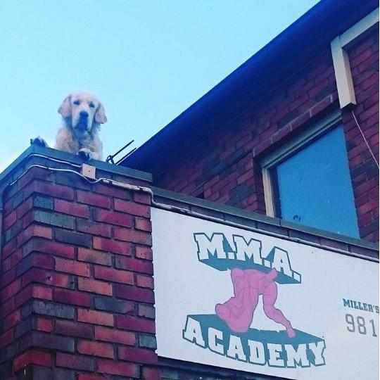 Det sto en artig MMA-hund og skuet utover Lisa Kristoffersens Plass på Bjølsen. Vi var selvfølgelig snarrådige, plukket opp mobilen og tok dette bildet.