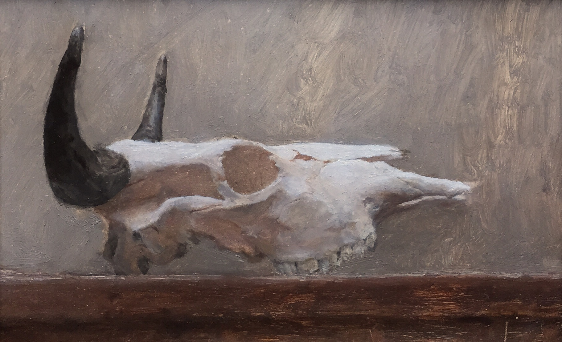 Kevin Müller Cisneros,  Steer   Skull,  oil on panel, 6.5x9.5 in