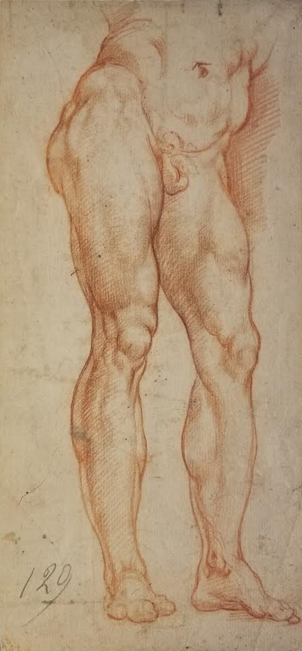 Italian School  (17th century)  Study of a Man's Legs and Torso  10 ½ x 4 ¾ in. red chalk on paper
